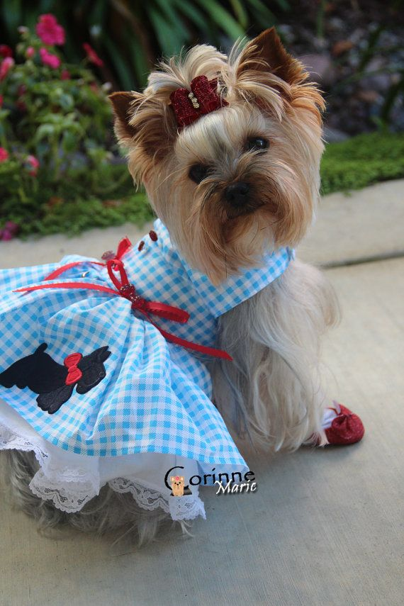 Dog Dress XS Blue Plaid By Nina's Couture by NinasCoutureCloset