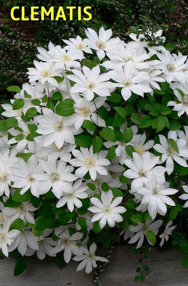 20 Best Beautiful Fragrant Flowers In The World Plant Species