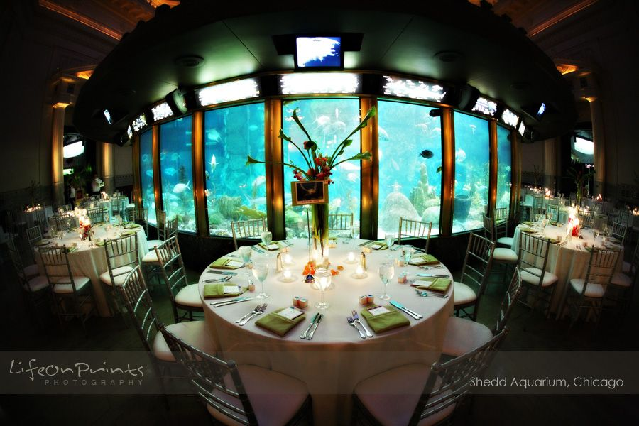 You Can Have A Wedding At The Shedd Aquarium In Chicago Yes Please