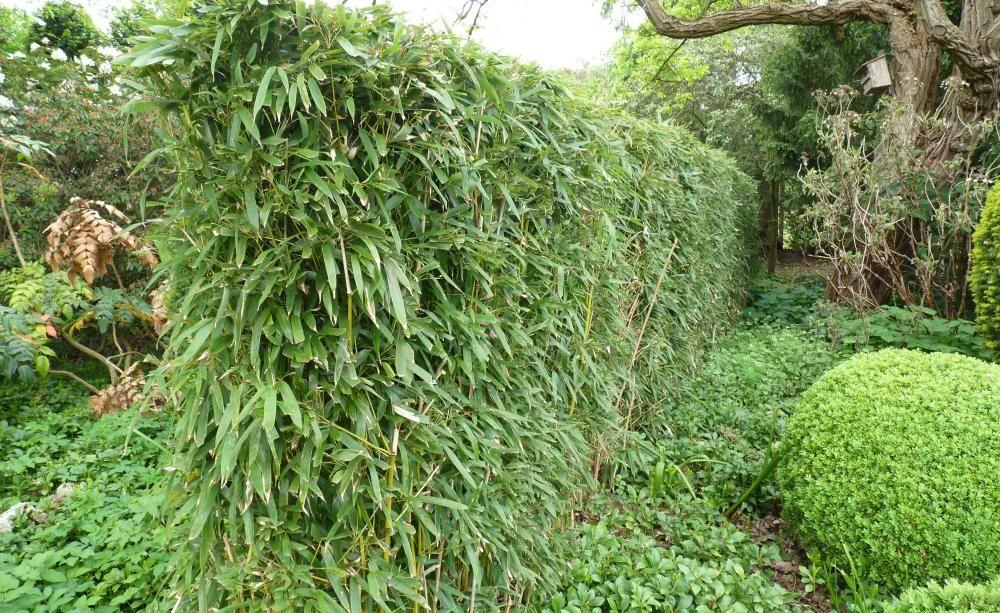 Bambus So Gelingt Der Schnitt Garten Pinterest Garten Garten