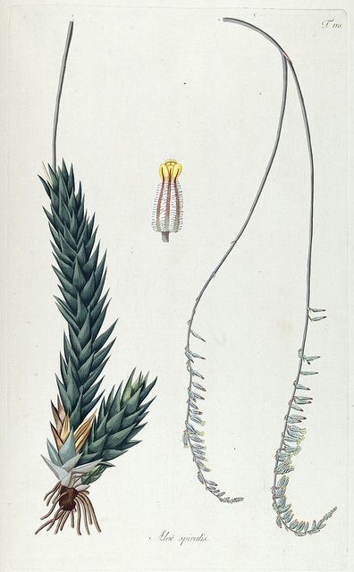 n201_w1150 by BioDivLibrary, via Flickr