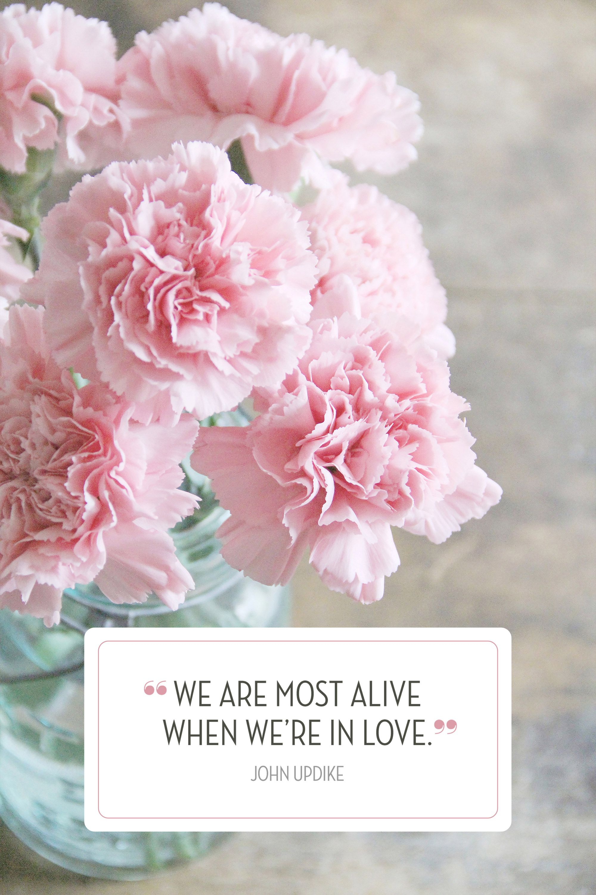 30 Valentine S Day Quotes That Ll Sweep Them Off Their Feet Pink Carnations Carnation Flower Carnations