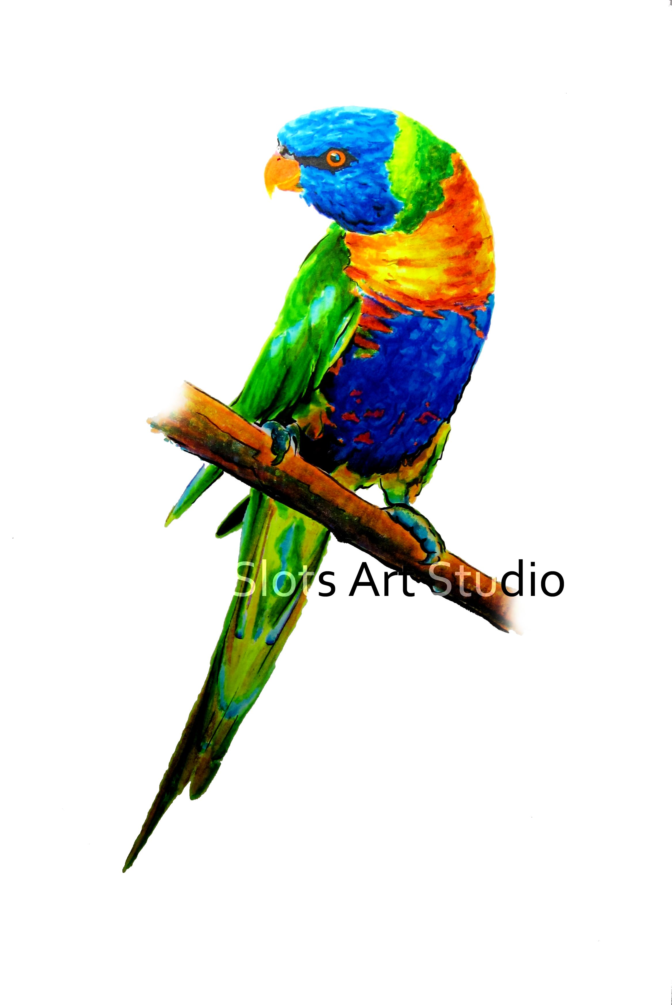 rainbow lorikeet � a difficult bird to draw due to its