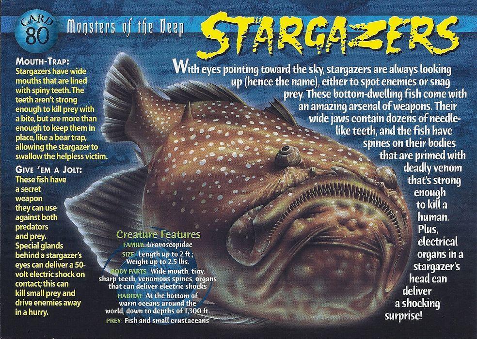 Stargazers Animal species, Interesting animals, Wild