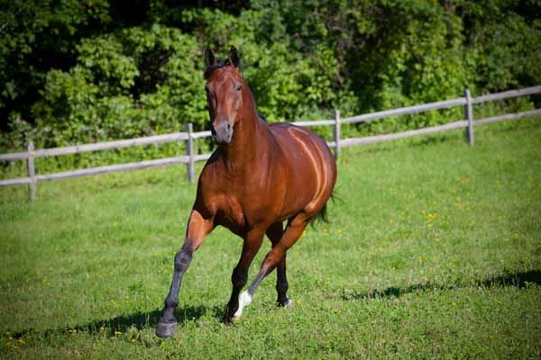 Tips for traveling with your horse