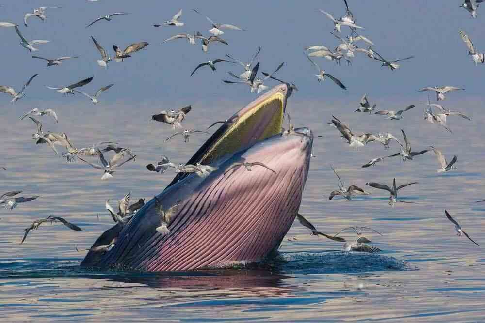 Do Whales Drink Water? | North American Mammals | Whale species, Whale, Mammals