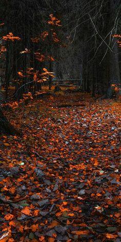 Autumn, orange leaves, forest, nature, 1080x2160 wallpaper