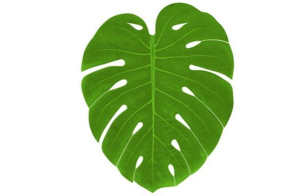 set de table feuille de palmier x4 feuillage leaf. Black Bedroom Furniture Sets. Home Design Ideas