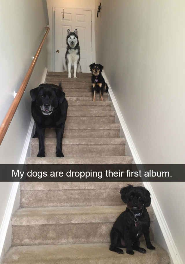 The Funniest Dog Snapchats Of All Time The Funniest Dogs And Dog - The 29 funniest dog snapchats of all time