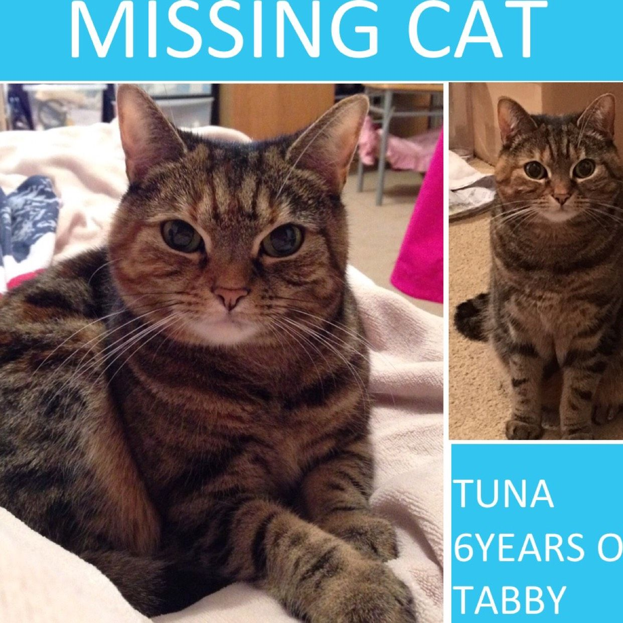 Missing tabby cat Cats, Tabby cat, Cat uk