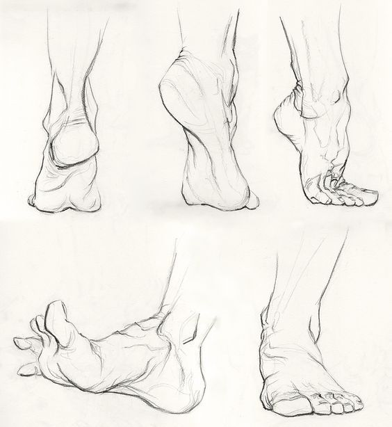 Photo of Organic   Anatomy art, Anatomy sketches, Human figure drawing