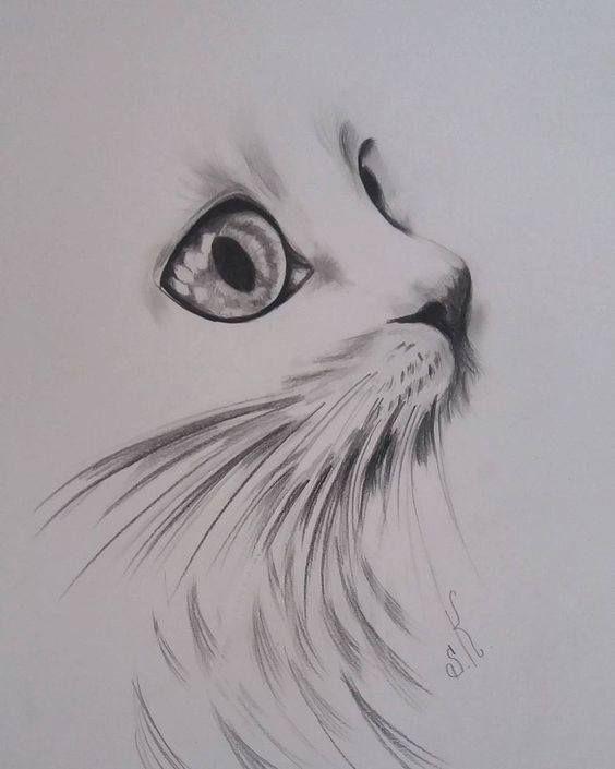 # Cat # drawing # eye cat # artist # art gallery # art illustration