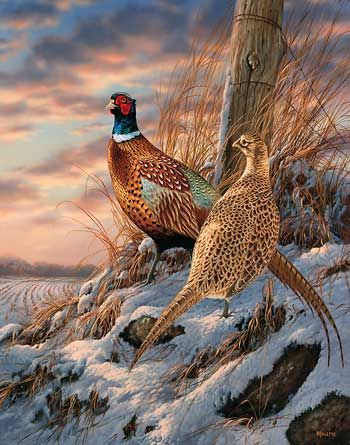Artist Painting Birds With Pheasant Feather
