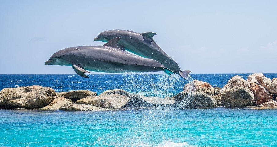Image Gratuite Sur Pixabay Dauphins Aquarium Saut Poissons En 2020 Photo Dauphin Dauphin Animales