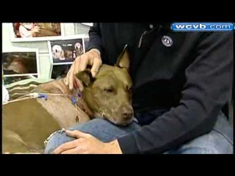 Dog Pulls Unconscious Owner From Train's Path