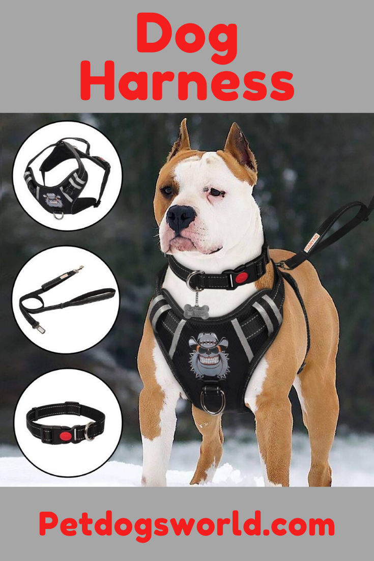 Best Harness For Large Dogs That Pull In 2020 Reviews