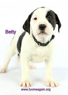 Bloomington Mn American Staffordshire Terrier Mix Meet Betty A Puppy For Adoption Http Www Adoptapet Com Pets Kitten Adoption Puppy Adoption