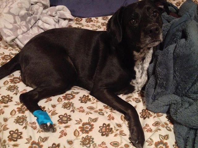 Even My Dog Benefits From Kt Tape Other Bandages Are Too