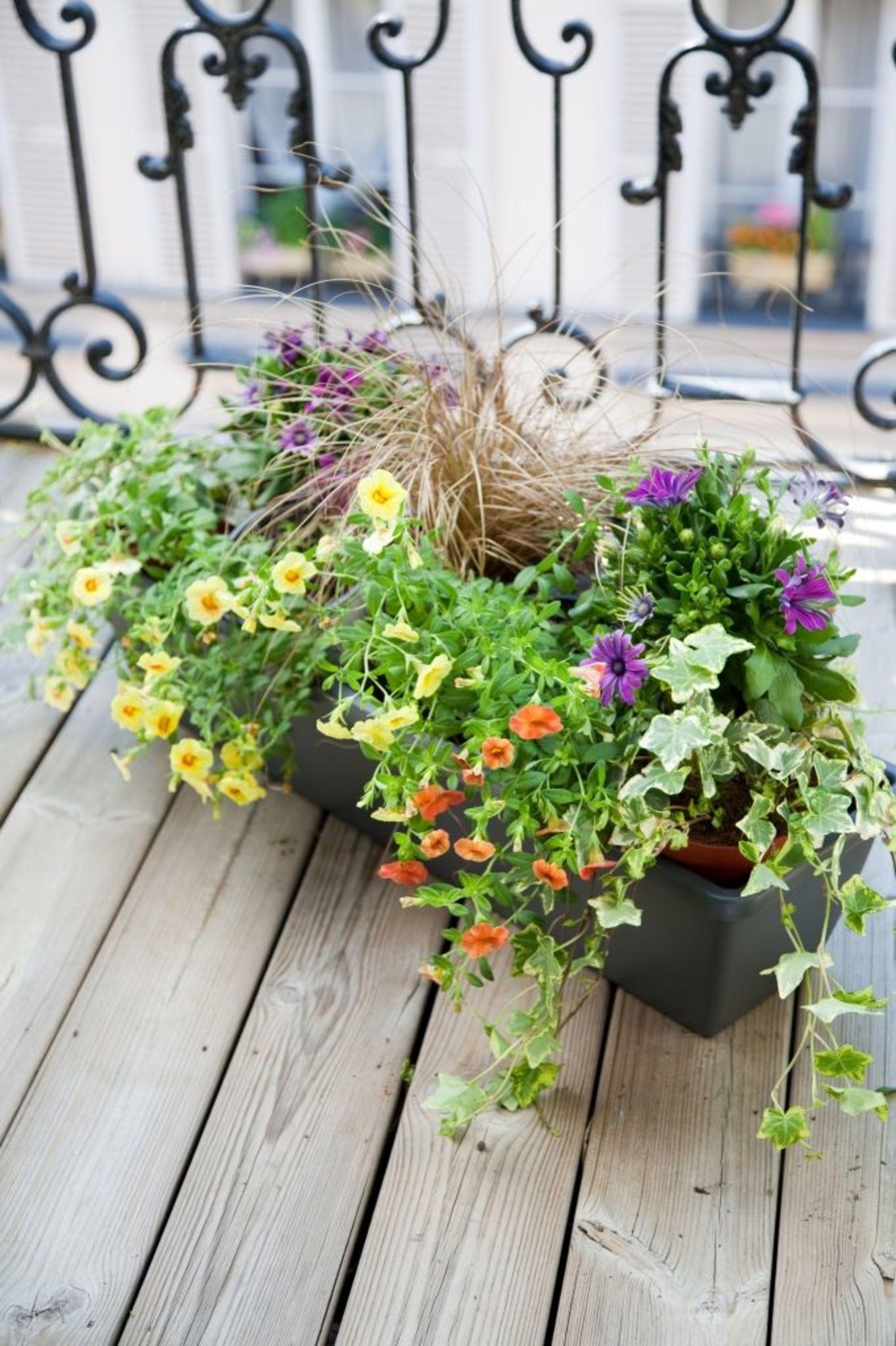 48+ Fleur pour jardiniere balcon trends