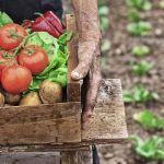 Que planter dans son potager - Quand planter des légumes ...