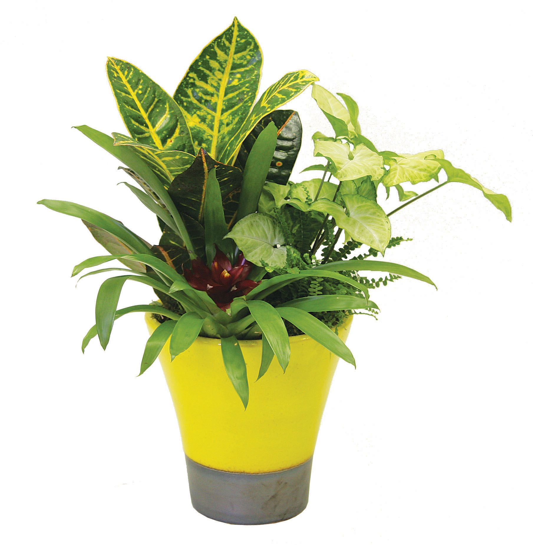 astonishing cement flower pots. Mix a variety of tropical plants in one pot to create stunning planter