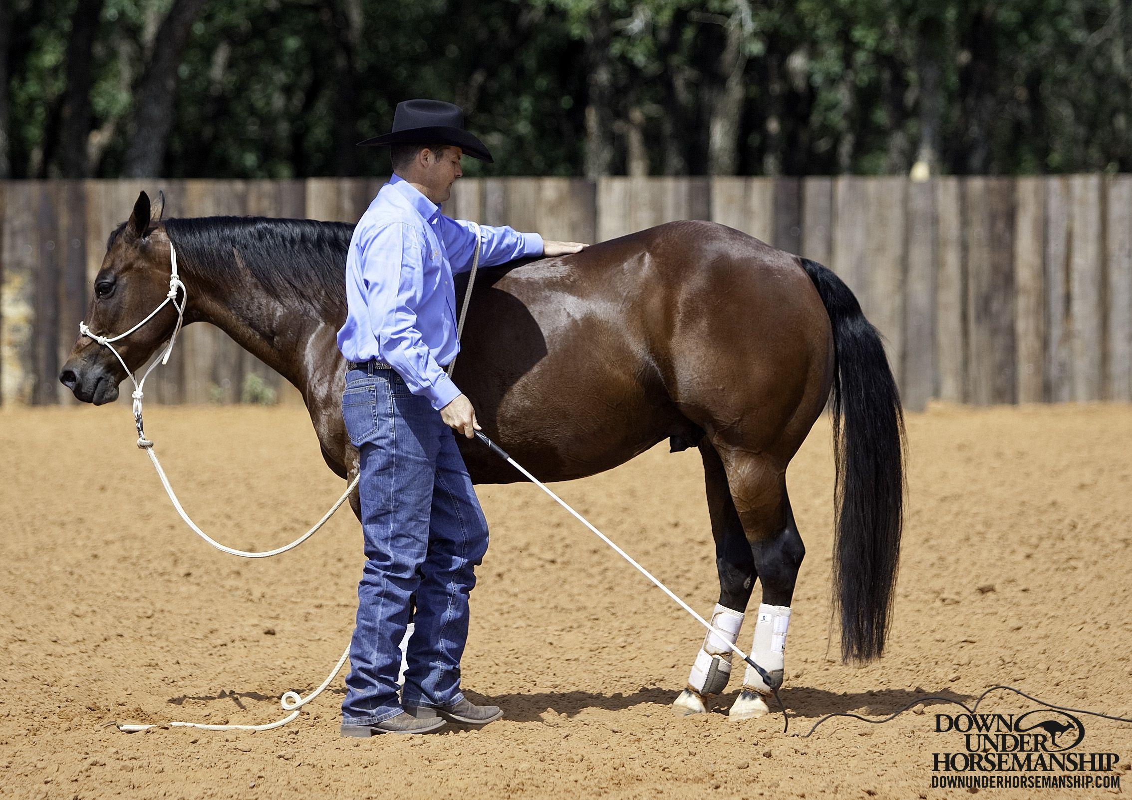 groundwork horses - HD2268×1602