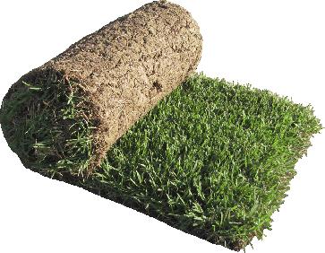 Zenith Zoysia Grass Sod Zoysia Grass Zoysia Sod Sod Grass