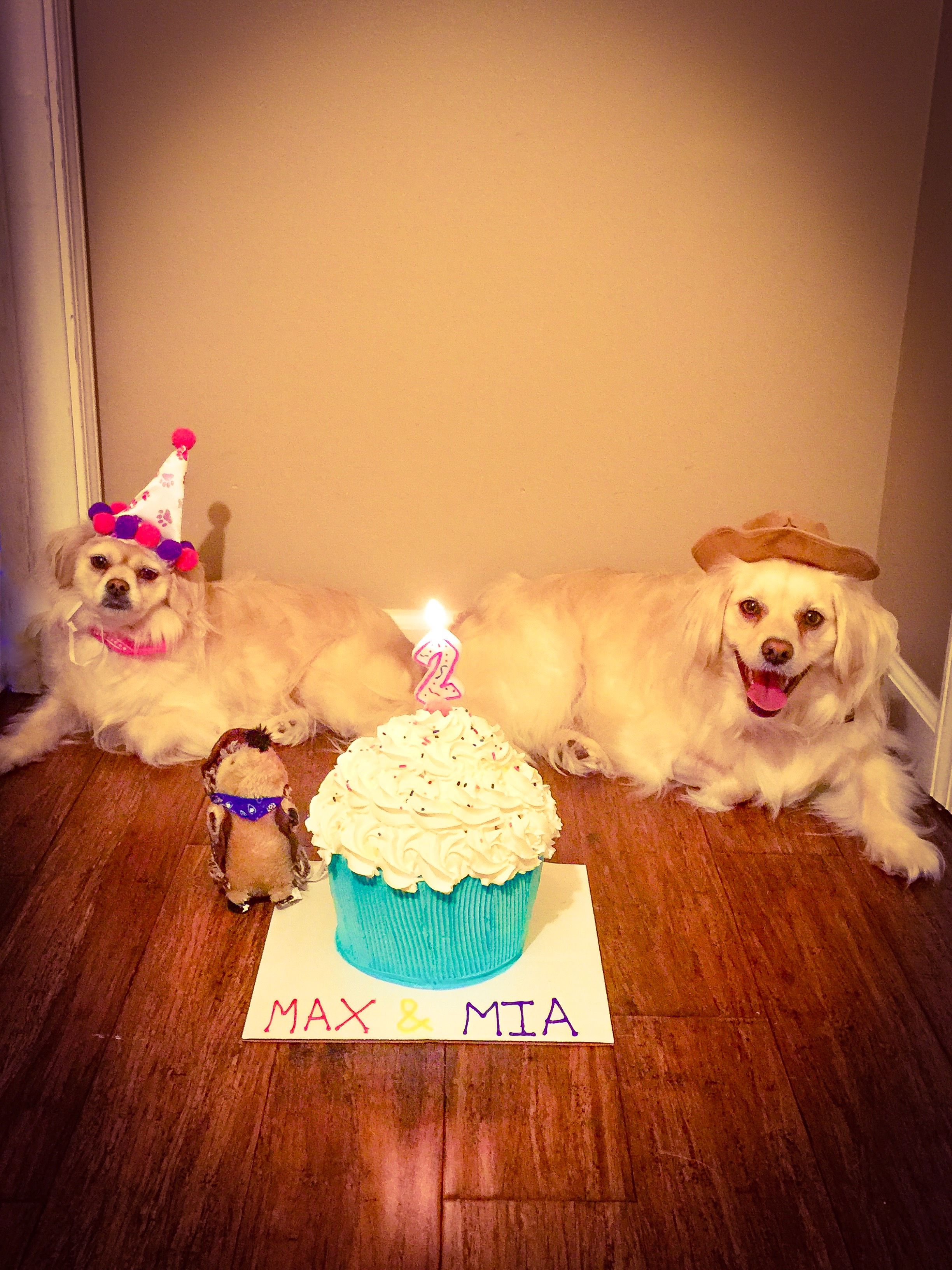 Max & Mia 2nd Bday🎈Both found on ADOPT! Don