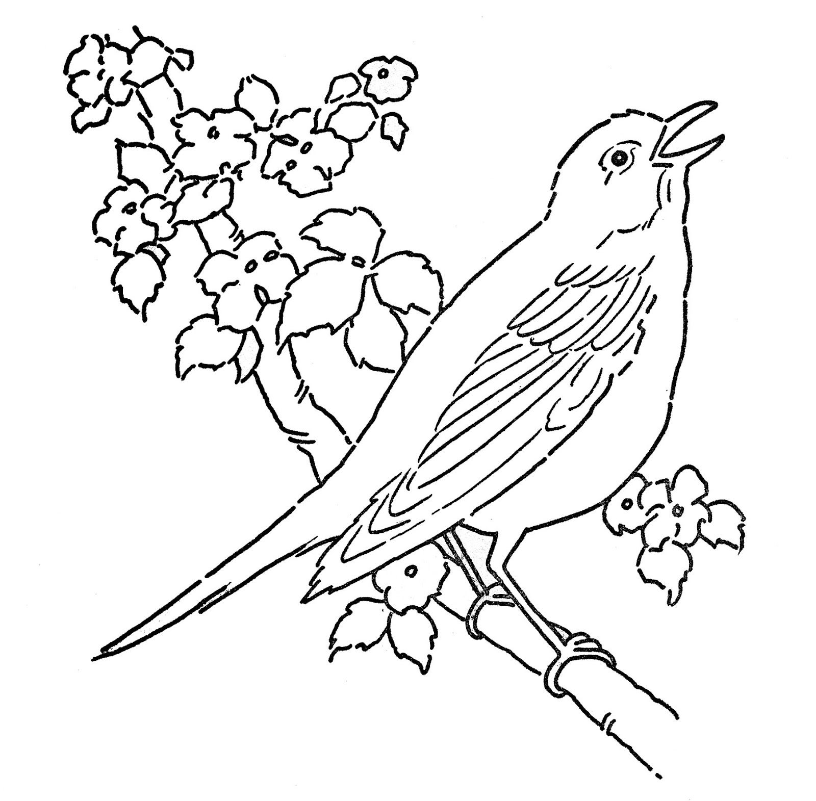 art pages | Line Art - Coloring Page - Bird with Blossoms - The Graphics Fairy