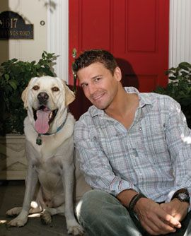David Boreanaz Discovered Walking Dog