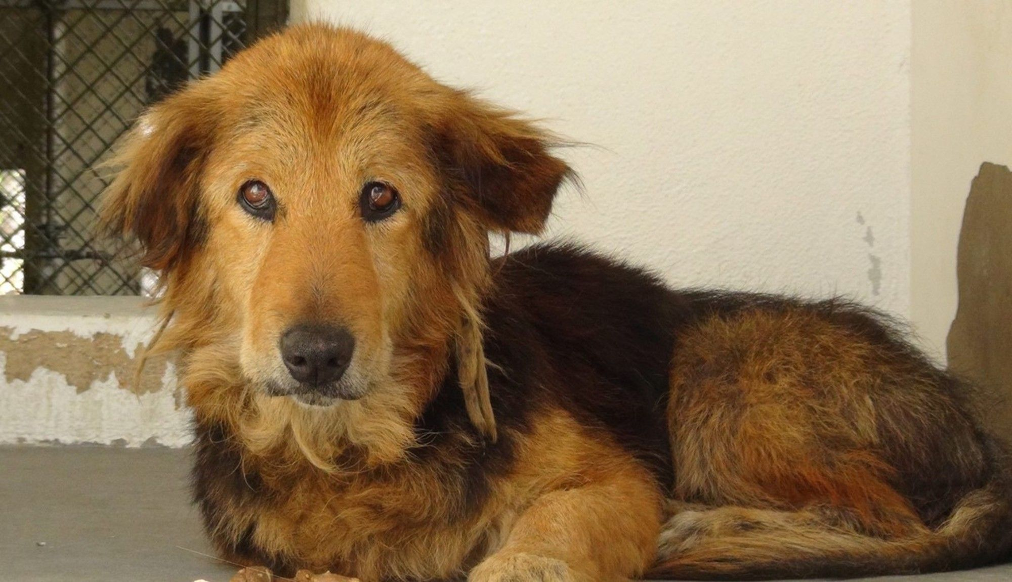 Senior Dog Discarded After Years Of Loyalty Because Family Was Too Busy Dogs Senior Dog Old Dogs