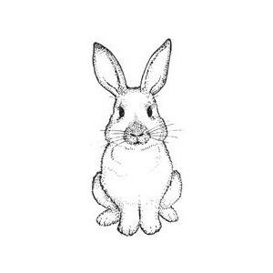 Rabbit Face Drawing Google Search Make Pinterest Rabbit