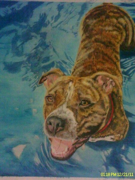 Commision of Apollo a Katrina rescued dog.Such a sweetheart.