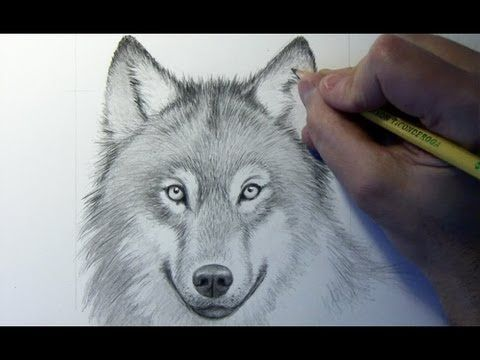 Drawing Time Lapse Wolf Website With Video Instructions About