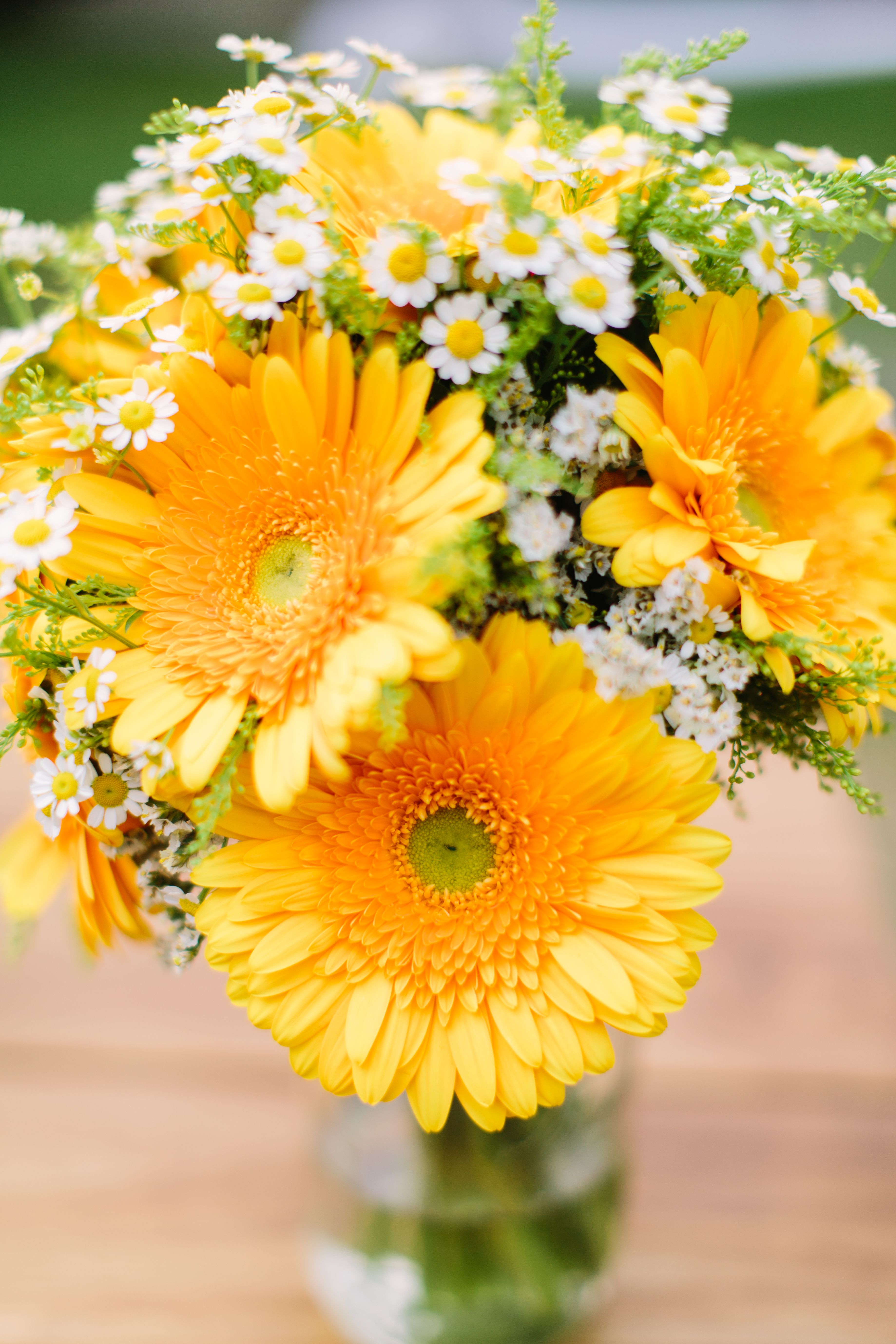 Yellow Gerbera And Matricaria Daisy Bouquet Photo Michaela