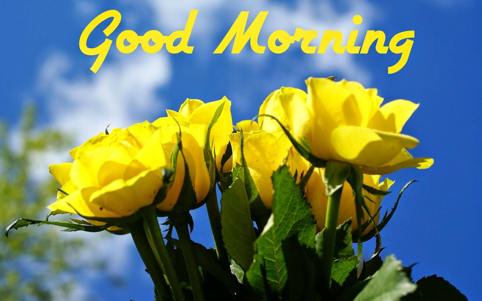 Beautiful Good Morning Greetings Coffee Cup Picture Good