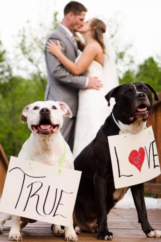 Aww....such a cute idea to include pets in the wedding or engagement photo session idea <3 www.bestweddingshowcase.com