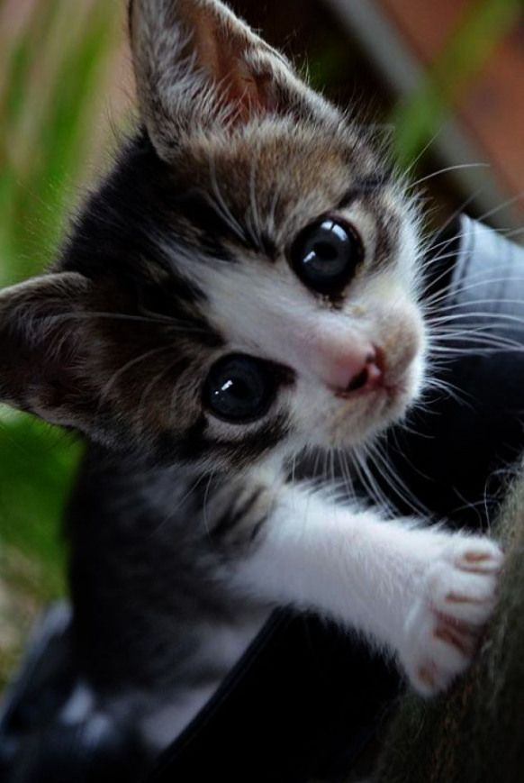 Pin By Debbie On For The Love Of Cats Kittens Cutest Funny Cute Cats Cute Cats