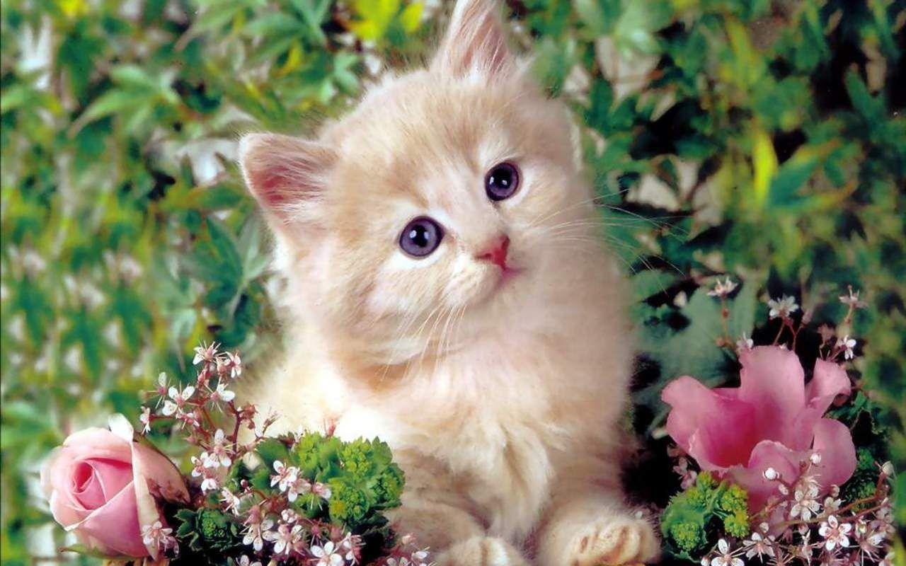 Cute Kitten Cats Kittens Cute Cat Wallpaper Kitten