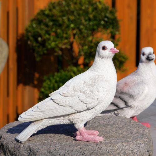 Gartenfigur Taube Weiss Brieftaube Vogel Voegel Hochzeit