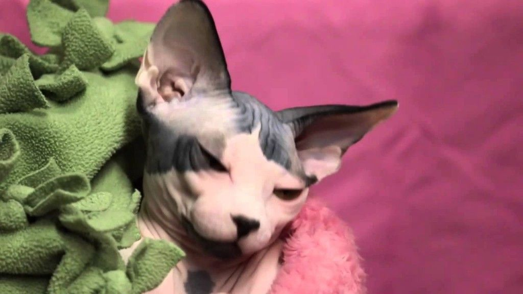 5 Reasons Why Cats Behave So Strangely   TV Entuarea.Com