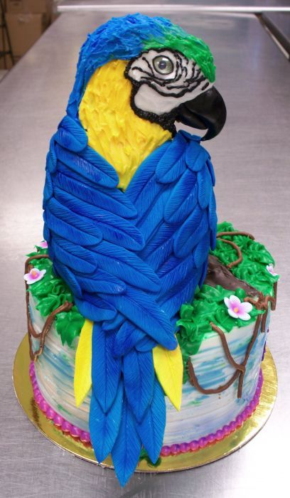 parrot cake Google Search PARROT CAKE Pinterest Cake