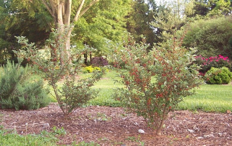 Landscaping Around Septic Systems in 2020 Septic system