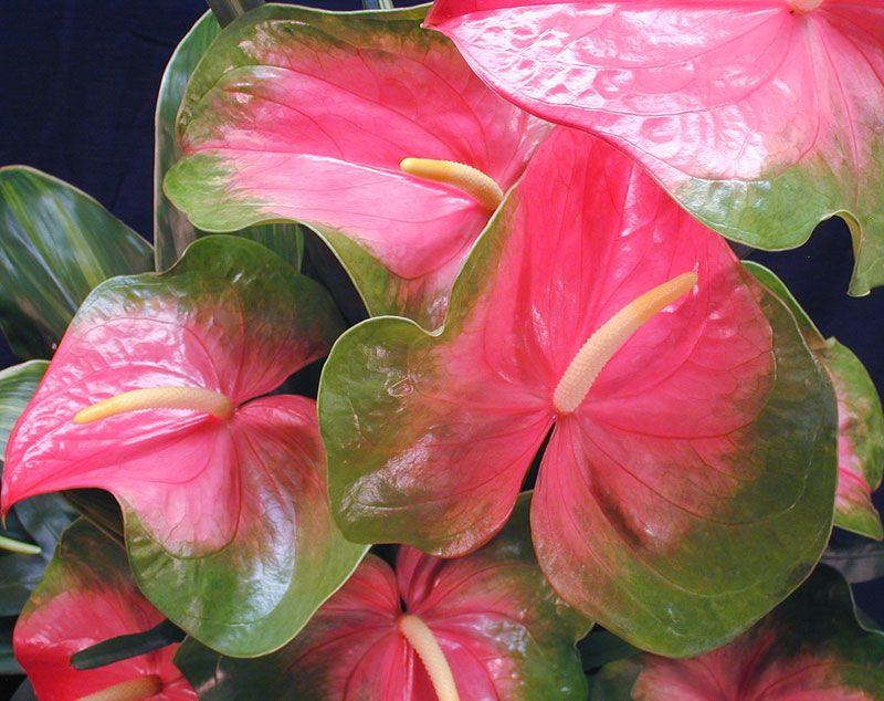 Pin de isabel serrano en flor pinterest flores for Vivero plantas tropicales