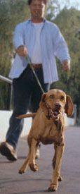 glossary of terms - diabetes mellitus in dogs and cats - insulin therapy for diabetic dogs and cats