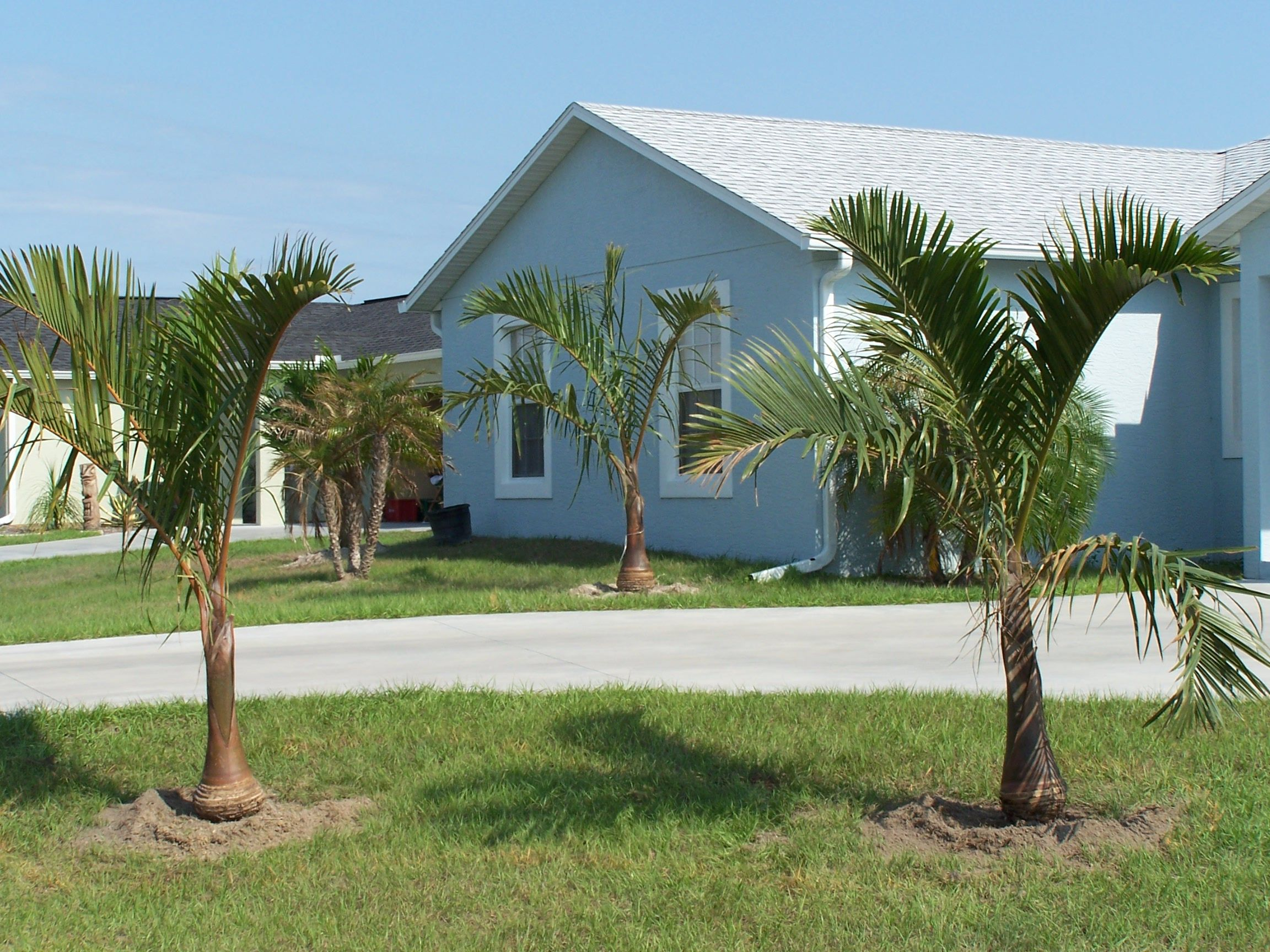 Coastal quality services landscaping services tree