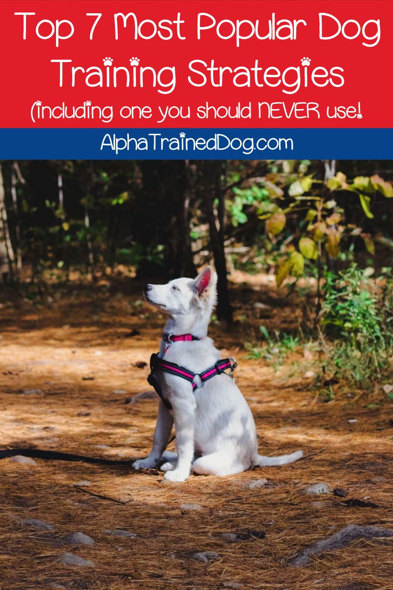 Did You Know That There Are Many Different Types Of Dog Training