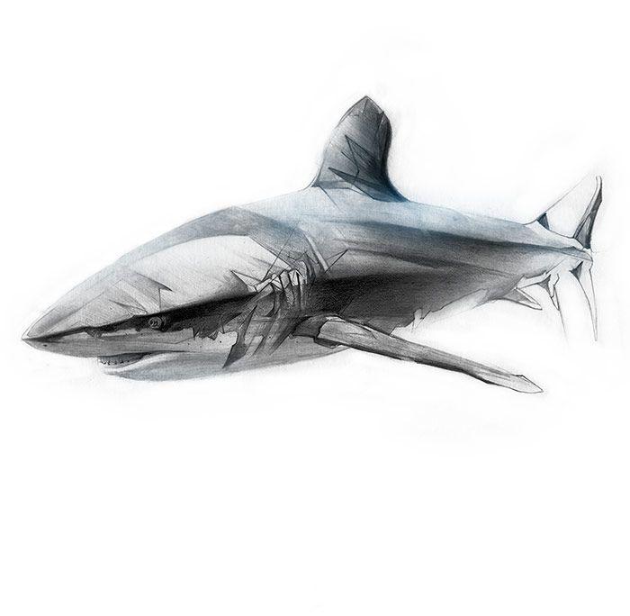 Pin de Elizabeth Padilla en Tattoo | Pinterest | Tiburones, Tatuajes ...