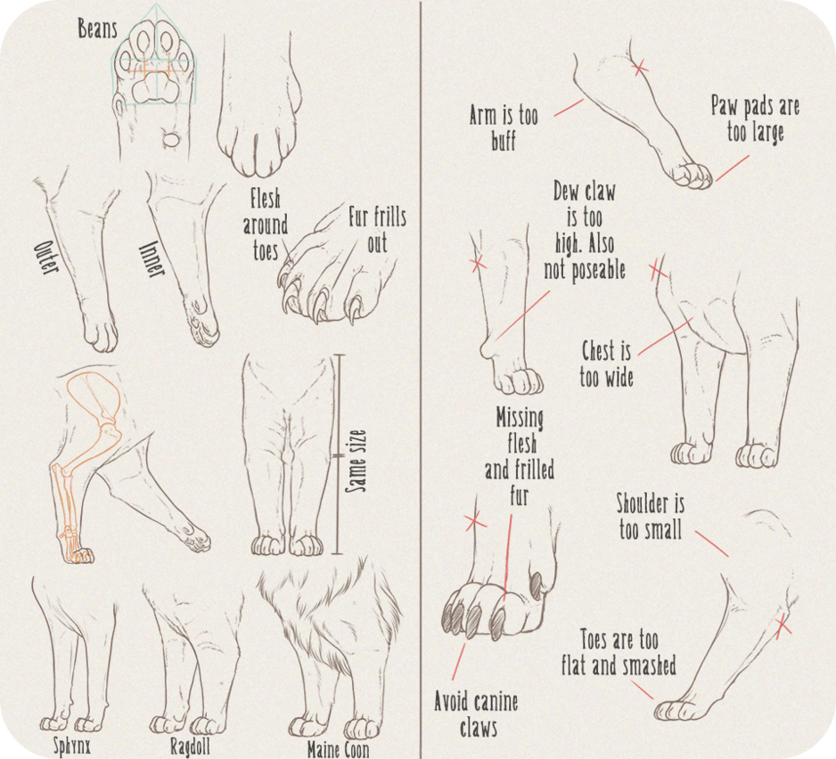 Realistic Domesticated Feline Front Leg Tutorial by Anti-Dark-Heart ...