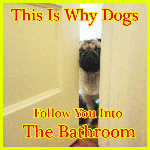 This Is Why Dogs Follow You Into The Bathroom I Never Knew This In 2020 Dogs Girls In Love Dog Lovers
